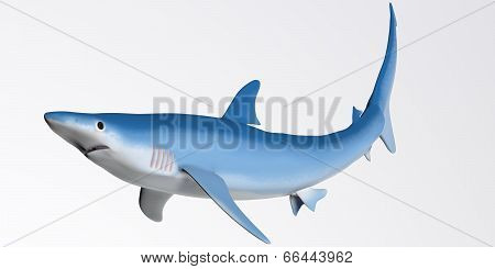 Blue Shark Profile