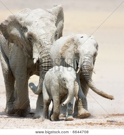 Elephants Approaching