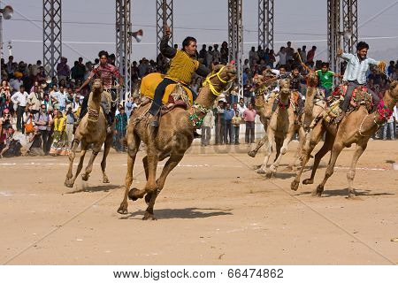 Pushkar, India - November 21: Pushkar Camel Mela (pushkar Camel Fair) On November 21, 2012 In Pushka
