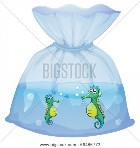 Illustration of the seahorses inside the plastic pouch on a white background