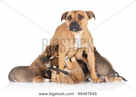 dog feeding her puppies