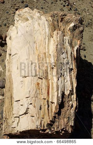 Petrified wood in Patagonia