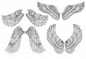 pic of cherub  - Set of four different vector angel wings in black and white outline in the open position for tattoo and use as design elements - JPG