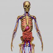 picture of exoskeleton  - is the body part that forms the supporting structure of an organism - JPG