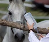 stock photo of intravenous  - Young female veterinarian preparing injection for horse on farm - JPG