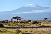 foto of kilimanjaro  - Mount Kilimanjaro in the African savannah in Kenya - JPG