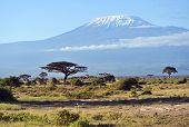 stock photo of kilimanjaro  - Mount Kilimanjaro in the African savannah in Kenya - JPG