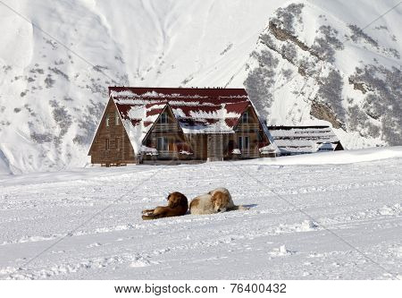 Two Dogs Rest On Ski Slope