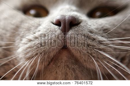 A Close-up Of A Cat's Nose And Whiskers At International Exibition
