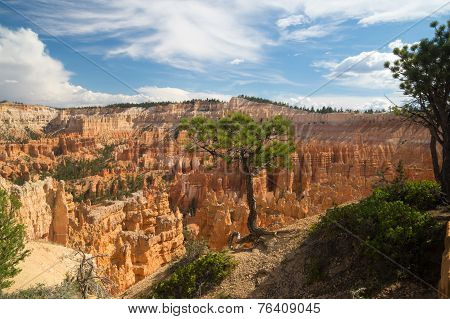 Tree Clings To The Edge Of Bryce Canyon
