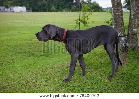 Outside Dog