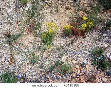 Fragile Desert Flora