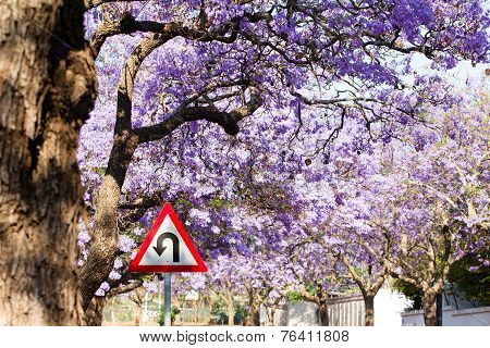 U-turn Road Sign Against Beautiful Purple Flowers Of Blossoming Jacaranda Trees