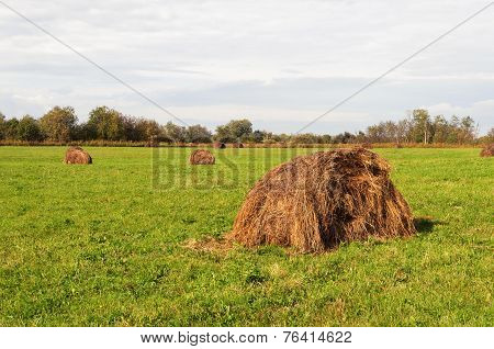 Haycock On Green Field In Autumn