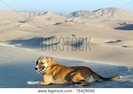 Dog On A Sand Dune