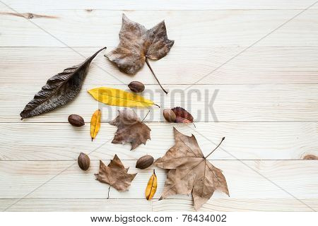 Autumn Leaves And Fruits