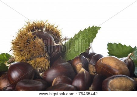 Chestnuts With Leaves And Burrs Isolated On A White Background