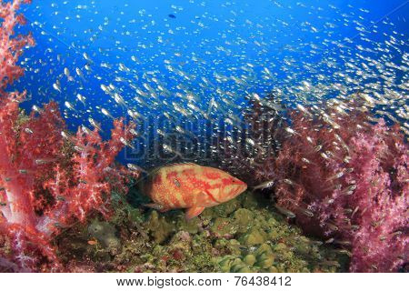 Beautiful Coral Reef with tropical fish