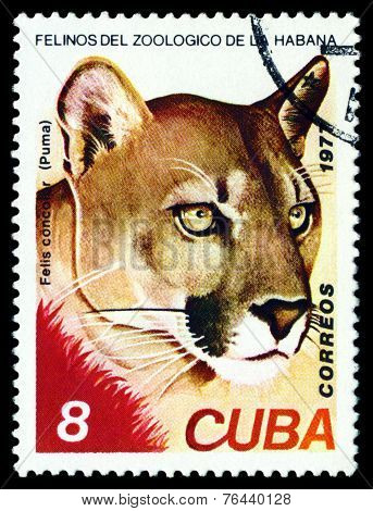 Vintage  Postage Stamp. Wild Big Cats. Puma.