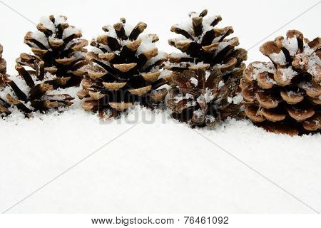 Many Christmas Pine Cones On Snow In Line