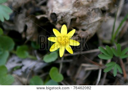 Beautiful Spring Yellow Flower