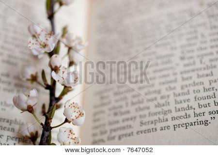 Sakura And Book