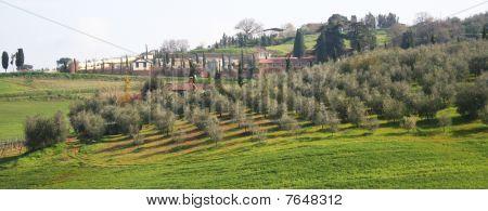 Italy. Tuscany Region, Val D'orcia Valley