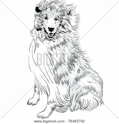 Vector Sketch Dog Rough ?ollie Breed Hand Drawing Vector