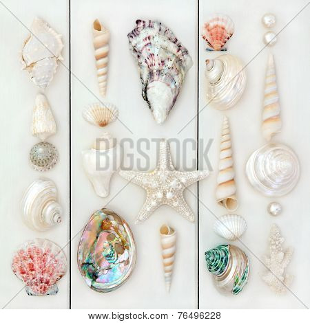 Seashell selection over wooden white background.