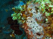 stock photo of squirting  - The surprising underwater world of the Bali basin - JPG