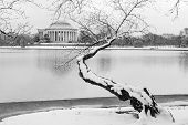 stock photo of thomas jefferson memorial  - Washington DC  - JPG