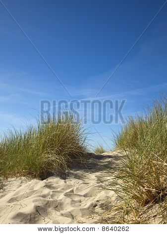 Marram Grass On Dune At North Sea, Blue Sky