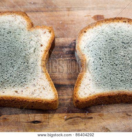 Mouldy Bread