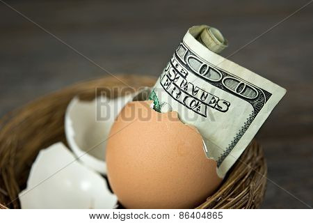 money in brown egg shell