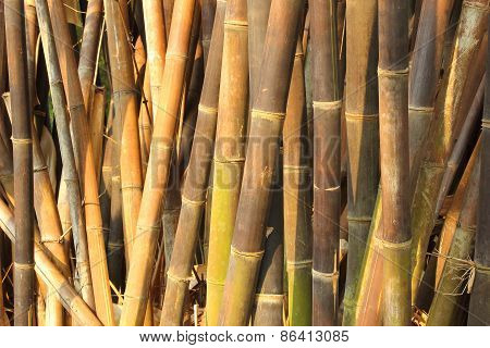Horizontal Dense Bamboo Trees