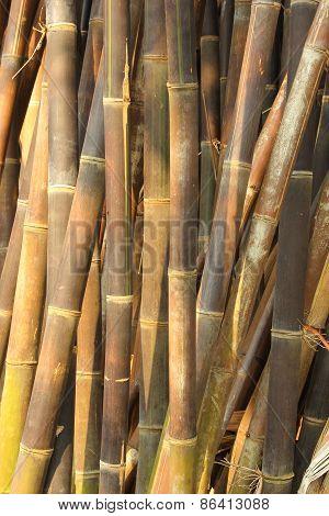 Vertical Dense Bamboo