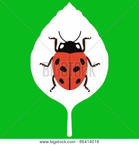 Vector illustration of leaf on green background
