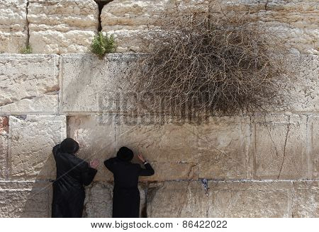 Orthodox Jewish man pray at the western wall