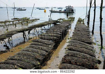 France, Oyster Farming On The Coast Of L Herbe