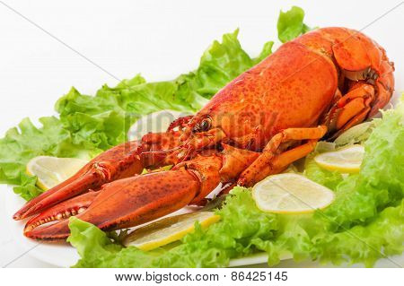 Cooked and boiled red lobster