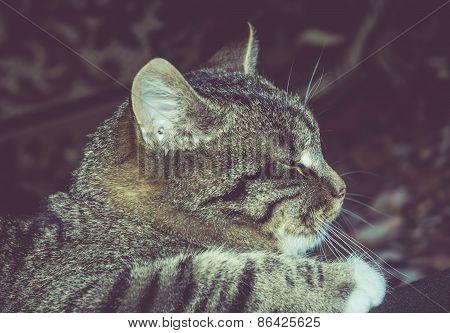 Retro Tabby Cat Portrait