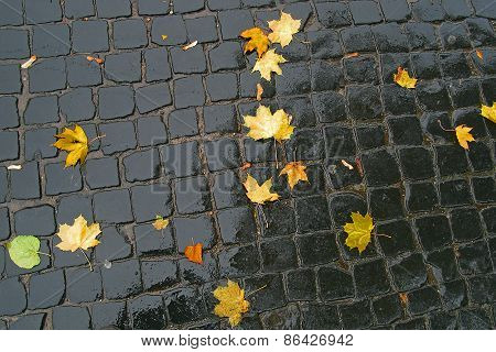 Maple Leaves On Pavement.