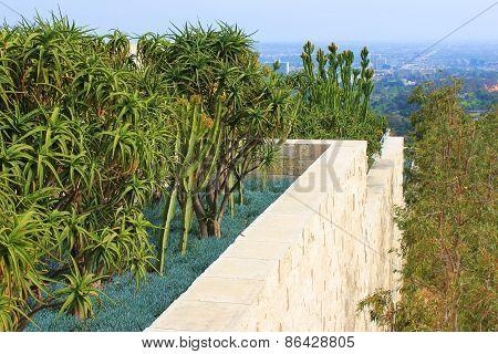 Roof Cactus Garden