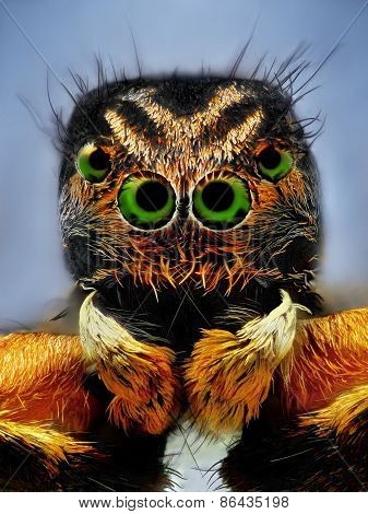 Extreme sharp portrait of jumping spider with green eyes taken with microscope lens
