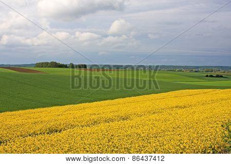 Rape Field in France