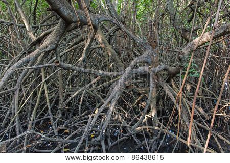 The Fruits Forest Mangrove