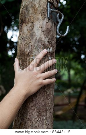 Male Hand Holding Tree Trunk With Hook