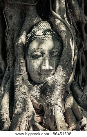 Buddha's Head in Tree Roots, Thailand