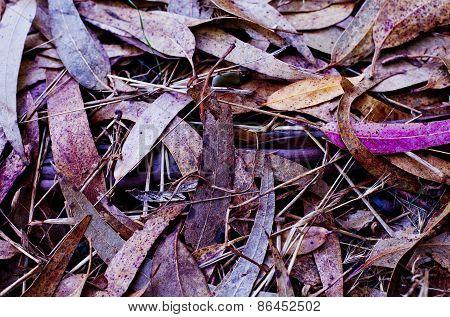Lavendar Leaves