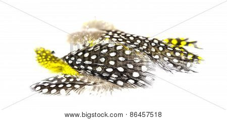 Collection Of Mottled Bird's Feathers On A White Background